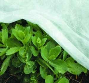 Bloemen en planten beschermen met folie