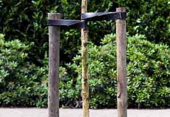 Boompalen plaatsen