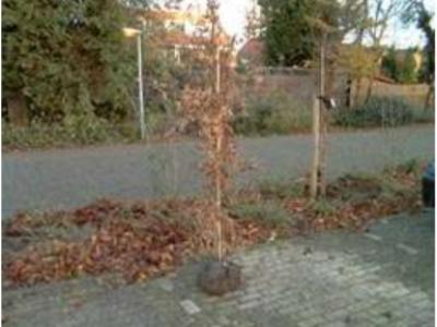 Een boom planten