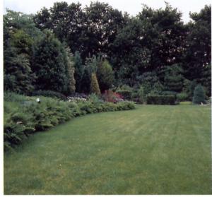 Een gras gazon zaaien 1