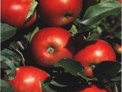 Herfstappel