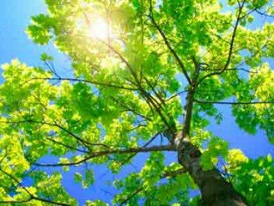 (Oude) bomen verzorgen