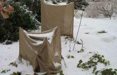 Vorstschade voorkomen aan houtige gewassen
