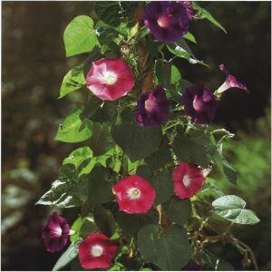 planten takken vastmaken aan de muur